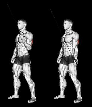 Triceps poulie haute
